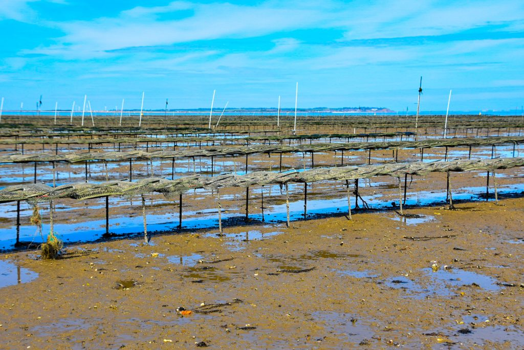 oyster farm in Whitstable