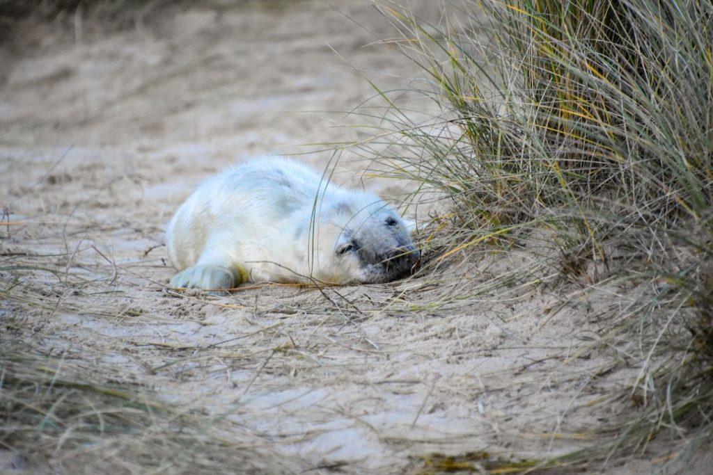 cucciolo di foca appena nato