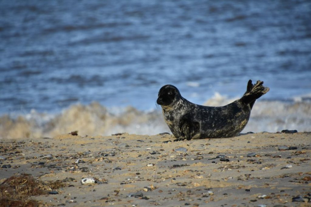 foca in spiaggia
