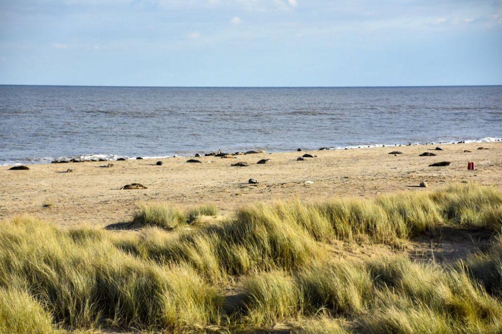 spiaggia e le foche di Horsey Beach