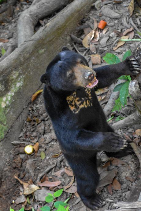 orso del sole