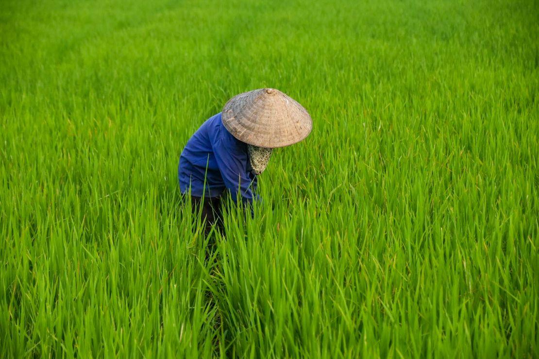 cappello vietnamita